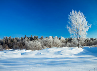 Nebraska Winter Pests