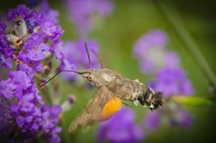 Omaha Pest Control services Papillion