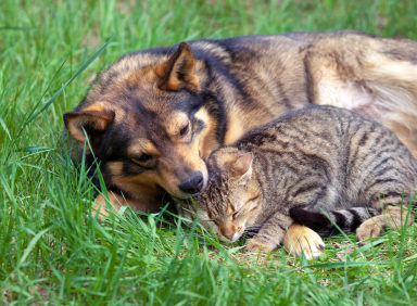 Your Pets Have Fleas?
