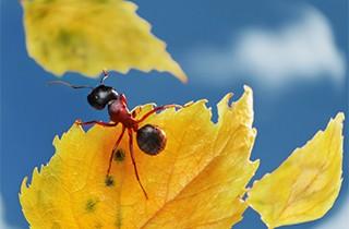 Pest Control Council Bluffs, IA