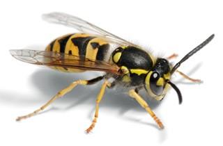 Pest Control and Exterminator Service - La Vista, NE