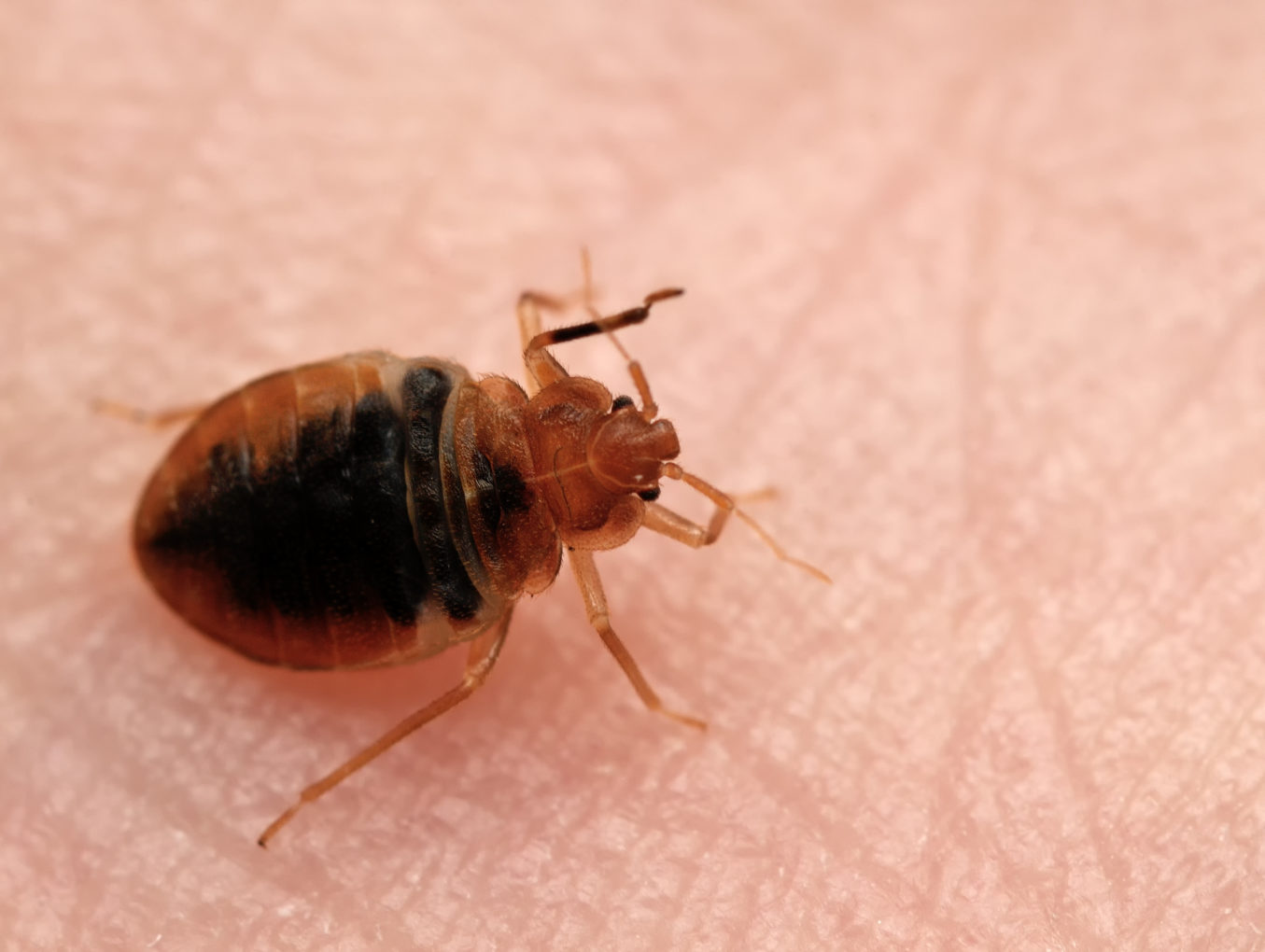 Bed Bug Extermination Omaha