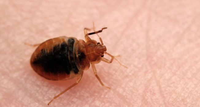 Bed Bug Extermination Omaha