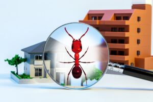 Bed Bug, Termite And Pest Inspections