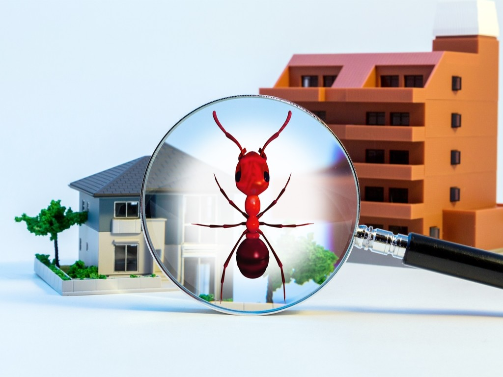 Exterminator for Pest Control in Elkhorn, NE