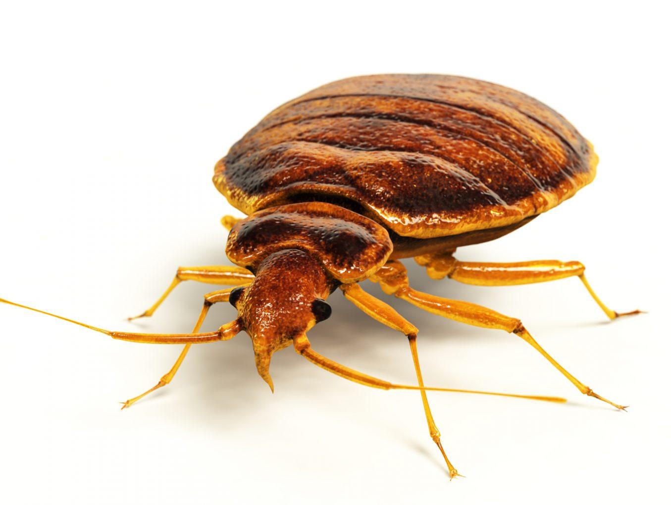 Bed Bugs Invade Nebraska